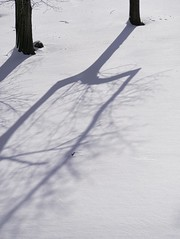 First Shadow After Snow (robfilms) Tags: tree shadow snow landscape m43 lumix panasonic olympus minimal abstract