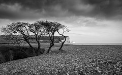 Race to the sea... (Lloyd Austin) Tags: climbing silhouette sigma1750m nikon d7200 monochrome mono bw blackwhite bnw contrasting dramatic atmosphere atmospheric unusual view landscape cloudscape clouds cloudy overcast water ocean englishchannel sea coast coastal coastline rocks pebbles cliffs chalk sevensisters england eastsussex cuckmerehaven beach trees windswept racetothesea