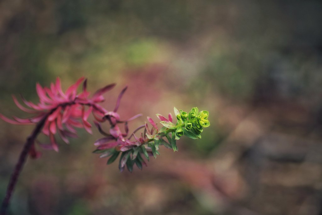 The world 39 s best photos of plante flickr hive mind for Plante verte exterieur hiver