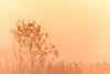 Misty Sunrise (NathalieSt) Tags: camargue europe france gard languedocroussillon brume leverdesoleil mist nikon nikond5500 nikonpassion nikonphotography sunrise bird oiseau fog brouillard silhouette backlight