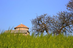 ειν' εκκλησιά ερημική (philos from Athens) Tags: greekchurch greece mountain spring deserted green meadow grazingland tree picmonkey