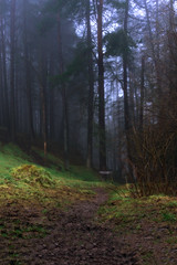 Step into the woods... (MilesGrayPhotography (AnimalsBeforeHumans)) Tags: 1635 fe1635mm sonyfe1635mmf4zaoss a7ii britain bonaly atmospheric edinburgh europe evening fe f4 forest fog glow haze ilce7m2 landscape lens landscapephotography hills nighfall outdoors oss photography photo portrait pentlandhills tranquil moody rocks river scotland scenic spring scottish scottishlandscapephotography town twilight uk unitedkingdom village wide zeiss woods path pathway trees mood mist misty foggy
