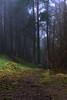 Step into the woods... (MilesGrayPhotography (AnimalsBeforeHumans)) Tags: 1635 fe1635mm sonyfe1635mmf4zaoss a7ii britain bonaly atmospheric edinburgh europe evening fe f4 forest fog glow haze ilce7m2 landscape lens landscapephotography hills nighfall outdoors oss photography photo portrait pentlandhills tranquil moody rocks river scotland scenic spring scottish scottishlandscapephotography town twilight uk unitedkingdom village wide zeiss woods path pathway trees mood mist misty foggy