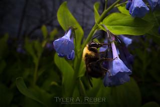 Bumblebee in Wonderland