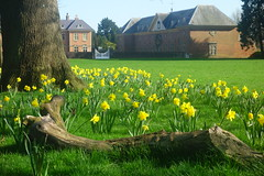 Daffodil Country (Dave Roberts3) Tags: wales newport gwent tredegarhouse orangery daffodil flower yellow tree branch landscape gate windows shadow spring springtime