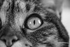 regard chat nb (Stei&Helvi) Tags: chat cat animal sony alpha