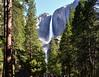 YOSEMITE FALLS (AlCapitol) Tags: yosemite nationalpark nikon d800 californie chutesdeau cascade fall yosemitefalls