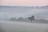 Sous la brume matinale (Excalibur67) Tags: nikon d750 sigma 70200f28apoexdgoshsm paysage landscape brume brouillard mist fog arbres trees nature