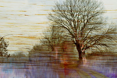 nothing to tell (paolocappella) Tags: tree colours awardtree shockofthenew
