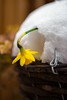 Not giving up (alanjcover) Tags: nikon nikon2470mmf28 snow spring