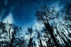 Stars in Brecon Beacons (markrickaby) Tags: brecon beacons national park uk hiking walking outdoors landscape noperson stars night sky trees clouds cloud blue contrast milky way long exposure