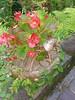 (kuuan) Tags: handphone photo huawei huaweinova2i huaweihonor9i huaweimaimang6 nova2i honor9i maimang6 sample rnel22 huaweirnel22 huaweimate10lite mate10lite butterfly flowers