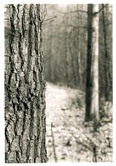 #137.11 (K.Pihl) Tags: rodinal1100 canon50mmf18 darkroom selenium canoneos50eelaniie blackwhite standdevelopment agfaapx100 schwarzweiss bw pellicolaanalogica film analog