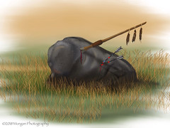 Sleeping Buffalo (Spring Equinox 2018) (noddfa_imaginings) Tags: prairie montana buffalo