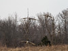IMGPJ32922_Fk - Jackson County Indiana - Migratory Birds - Ewing Bottoms - Sandhill Cranes (David L. Black) Tags: jacksoncountyindiana birds sandhillcranes olympusomdem1mkii olympus300f4014xtc