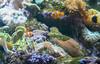 DSC_7814 (martindragon13) Tags: nswaustrailia sydney sydneyaquarium