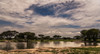 waiting to see something (David Ruiz Luna) Tags: laguna lagoon water agua reflejos reflections trees arboles acacia clouds nubes sky cielo landscape paisaje escenario outdoors tarangirenationalpark nationalpark parquenacional tanzania manyararegion tarangireriver ecosystem ecosistema wilderness nature jungle naturephotography nikon nikond750 africa fullframe photography fotografía unitedrepublicoftanzania naturaleza turismo travel trip touraroundtheworld viajar naturelover beautyinnature beauty belleza scenic mbugwe