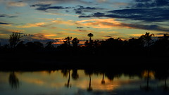 Late Winter Sunset (Jim Mullhaupt) Tags: sunset sundown dusk sun evening endofday sky clouds color red gold orange pink yellow blue tree palm outdoor silhouette weather tropical exotic wallpaper landscape nikon coolpix p900 pond lake water reflection manateecounty bradenton florida jimmullhaupt cloudsstormssunsetssunrises photo flickr geographic picture pictures camera snapshot photography nikoncoolpixp900 nikonp900 coolpixp900