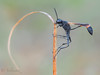 Fishing (veltrahez) Tags: miami florida unitedstates us ngc macro nature life em1 zuiko closeup