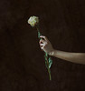 (Wendy Lu.) Tags: select wendylu canon5d fineart fine art photography oil painting classical arm reaching out holding dried white flower surreal conceptual emotional concept