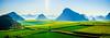 Rapeseed Field . (Chula Amonjanyaporn) Tags: chula amornjanyaporn rapeseed field amorn sony