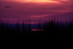 evening spectacle (mariola aga) Tags: evening sun sunset sky meadow grass light nature