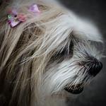 Ruff beauty thumbnail