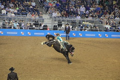 IMG_2327 (melodavis@sbcglobal.net) Tags: rodeohouston 2018 rodeo livestock heifer farmlife steer saddlebronc bronc bull bullriding calfscramble alpaca