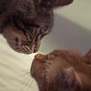 Berührung (_Papyrus) Tags: m42 porstcolorreflexauto50mm17 katzen kater cats porstcolorreflex50mm
