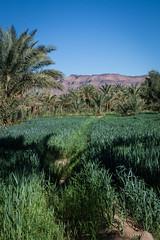 Vallee du Draa © Sophie Bigo - SBGD 2018-5 (SBGD_SophieBigo) Tags: photography artdirector freelance sophiebigo maroc trip travelphotography traveler trek morocco light