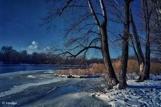 Trees by the River in Winter