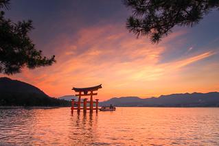 Torii at sunset... Sacred Miyajima .Unesco...