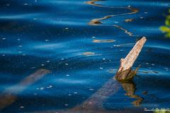 Långholmens (carbonelli93) Tags: rosso stoccolma stockholm sweden svezia sea mare fiume river långholmens water acqua blu blue