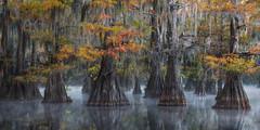 Jambalaya (D Breezy - davidthompsonphotography.com) Tags: smamps moody mood south southern bayou cypresstrees fog mist eerie mysterious kayak nikon d800e pano