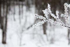 Frozen - Candus - 15