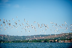 Jinja-H18_6340 (Carl LaCasse) Tags: uganda jinga lakevictoria nile river source people smile birds fishishing sunset beauty