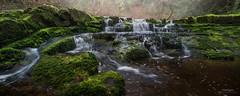 Mossy Misery - Triple Falls, Vancouver Island (Gavin Hardcastle - Fototripper) Tags: waterfall triple falls moss mossy green vancouverisland britishcolumbia bc errington spring