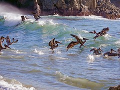 Birds in the Ocean (Seymour Lu) Tags: