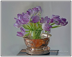 Nature- Flowers - Beauty - A Pleasure to Behold. (Bill E2011) Tags: nature flowers beauty canon tulips colour design