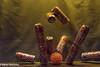 Kölsch Kegeln (Günter Hentschel) Tags: kegeln bierdose kölschdose kölsch frühkölsch lecker meinkölsch bier verrücktebilder verrückt dieanderenbilder hentschel flickr indoor april 4 2018 april2018 deutschland germany germania alemania allemagne europa nrw nikon nikond5500 d5500