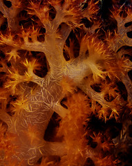 soft coral close up (b.campbell65) Tags: animal biology color colorful conservation coral creature dive environment fiji healthy island marine natural nature ocean reef saltwater scenery scuba sea seascape softcoral travel tropical underwater water wildlife