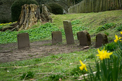 20180322-11_Coombe Abbey Country Park - Doggy Grave Stones (gary.hadden) Tags: coombeabbey coombepark coventry warwickshire countrypark rambling countrywalking daffs doffodils flowers yellow spring graves doggygraves gravestones