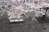 横浜みなとみらい21 ∣ Yokohama Minato Marai 21 (Iyhon Chiu) Tags: yokohama 横浜 横濱 日本 japan d750 港未來21 みなとみらい21 minatomirai21 city さくら 桜 春 spring cherryblossom blossom 櫻花 花見 花 flower ソメイヨシノ