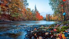 Fall colors (pramodphotography7) Tags: fall fallcolors water river leaves trees sky cloud lysaker oslo norway lysakerstation