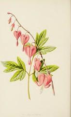 Anglų lietuvių žodynas. Žodis lyre-flower reiškia lyra-gėlių lietuviškai.