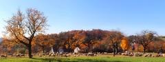 Schafe (wernerfunk) Tags: landschaft tiere natur bäume