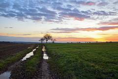 La naissance du jour (Croc'odile67) Tags: nikon d3300 sigma contemporary 18200dcoshsmc paysage landscape ciel cloud sky nature nuage levéedesoleil arbres trees campagne