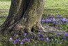 Spring Flowers, Stanley Park, Blackpool (Patrick Cray) Tags: blackpool england lancashire landscape spring stanleypark ngc