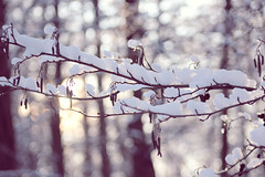 Snowy forest. (izzistudio) Tags: buy photography print etsy shop izzistudio snow forest north nordic snowy wintertime wood branch white lights macro canon trees