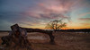 Salute to the night (etsie74) Tags: lanscape sunset colors epic romatic compostion landscape tree nature travel veluwe zandverstuiving dutch nl contrast contra lines